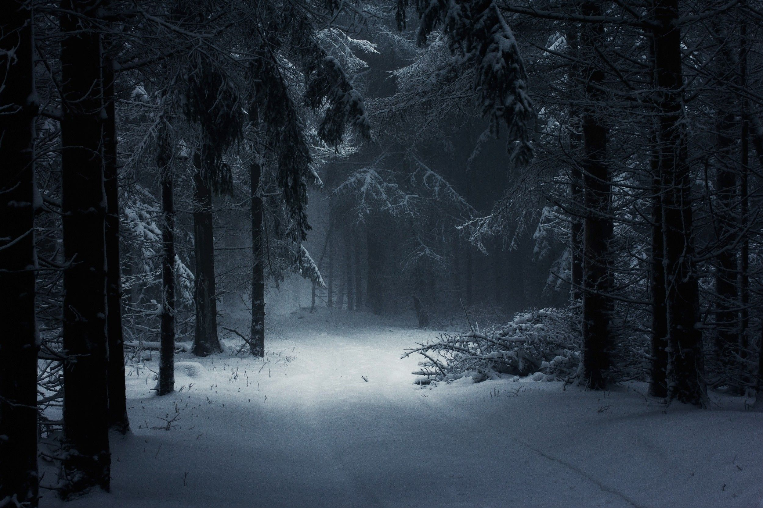 landscape nature winter forest snow mist daylight path trees