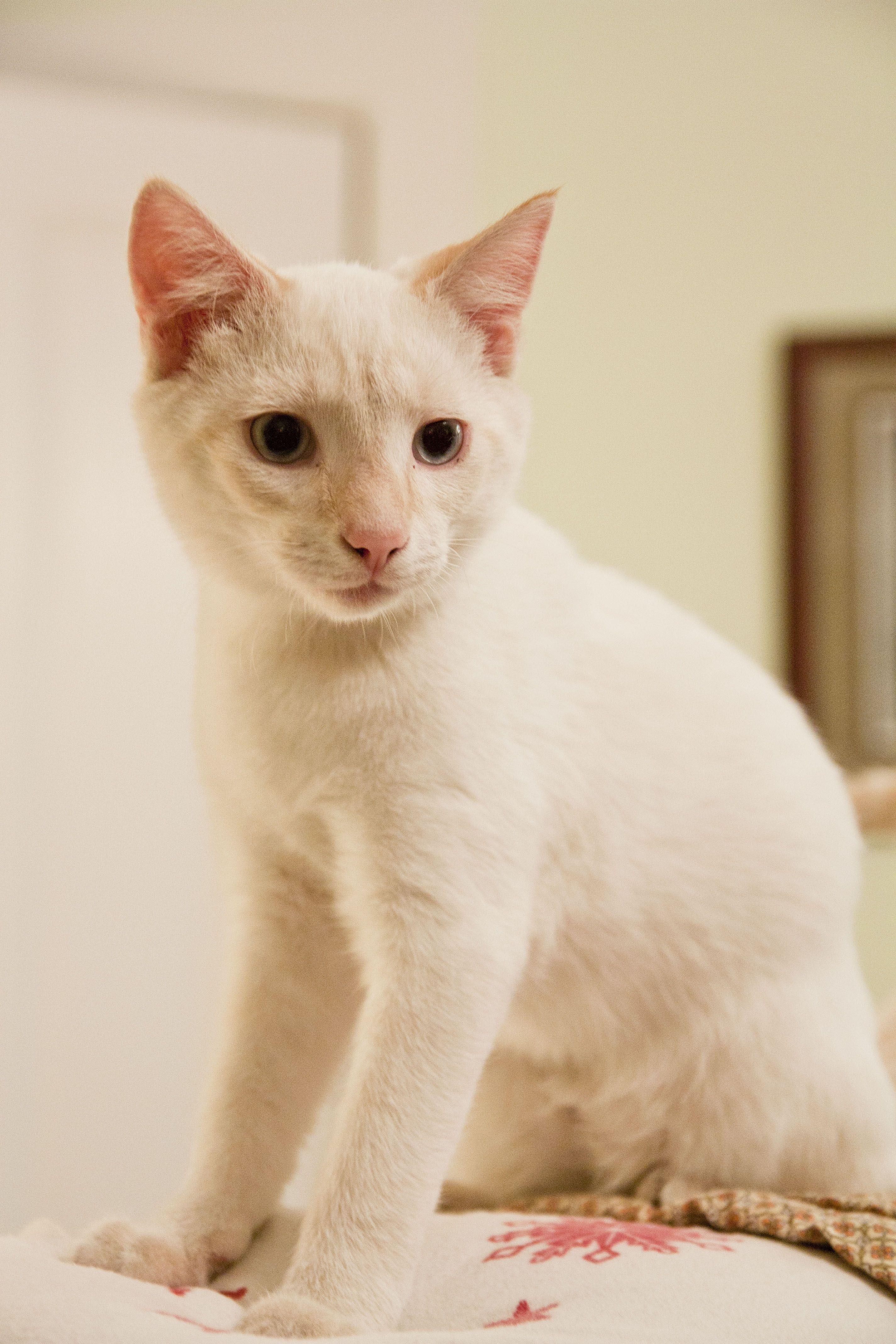 10 Cream Colored Cat Names Cream Colored Gemstones Cream Colored