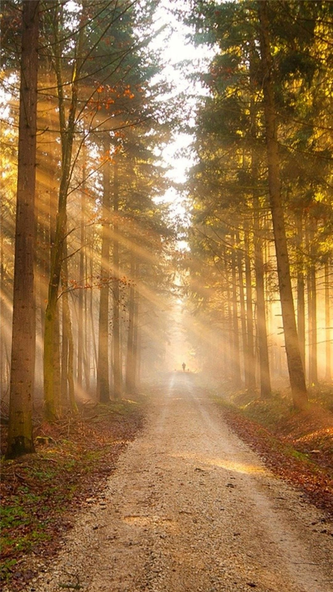 Nature Sunshine Grove Forest Path Iphone  Plus Wallpaper