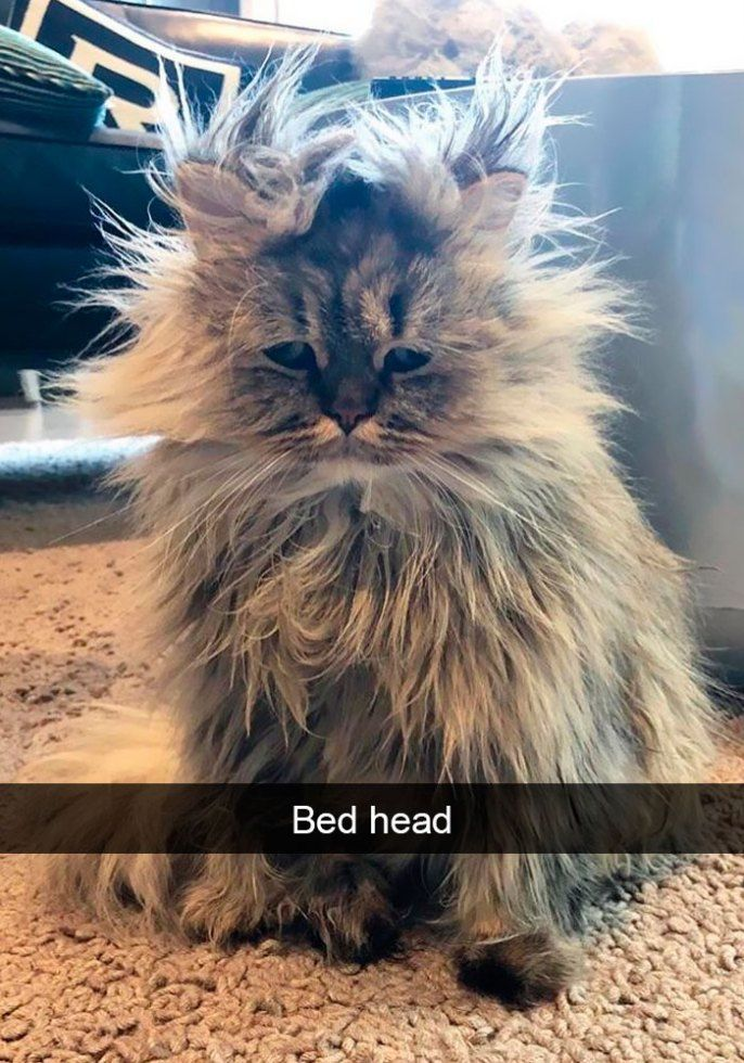 17 Funny Cat Memes Funny Cat Photos Funny Cat Memes Funny Animal Pictures