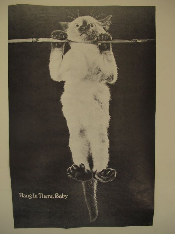 Hang In There Cat Poster Original 70s : there, poster, original, Original, There,, Poster, Great, Condition!, There, Posters,, Posters