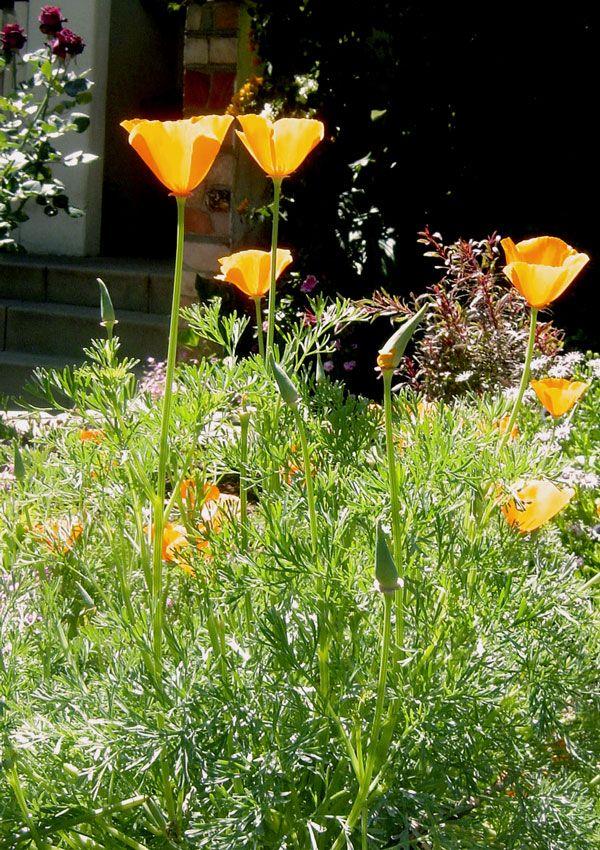 Flores silvestres.......