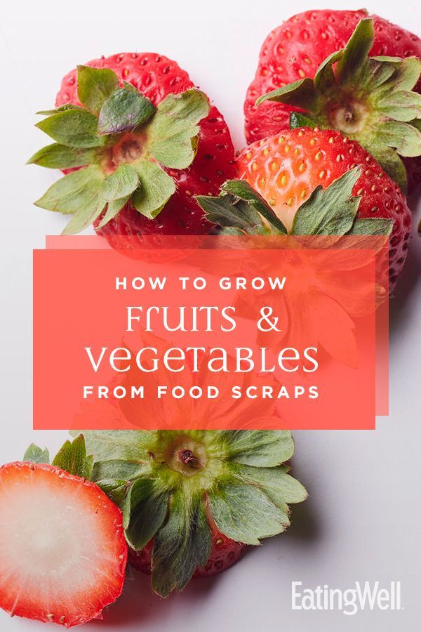 How to Grow Fruits & Vegetables from Food Scraps is part of Food scraps, Regrow vegetables, Growing fruit, Vegetable scraps, Fruit plants, Growing vegetables - Instead of tossing those veggie stems, butts and seeds, give them new life by regrowing them into plants  These gardening tips will help you get started