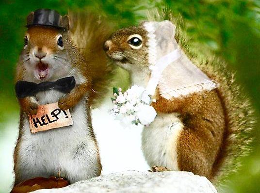 Squirrel wedding | Squirrel funny, Cute squirrel, Squirrel pictures