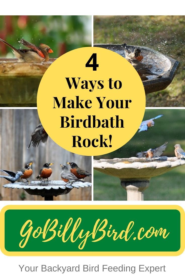 how to attract birds to your balcony