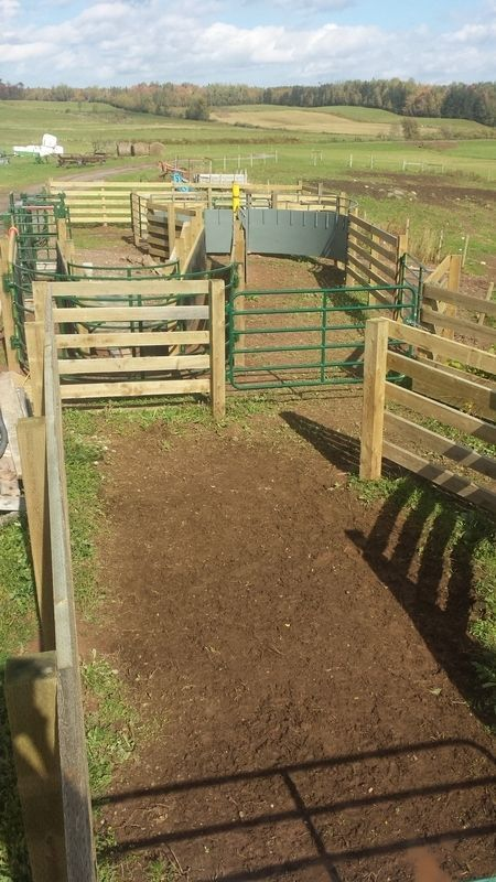 Nrs Box S Fence Alley Backstop Besi Cattle