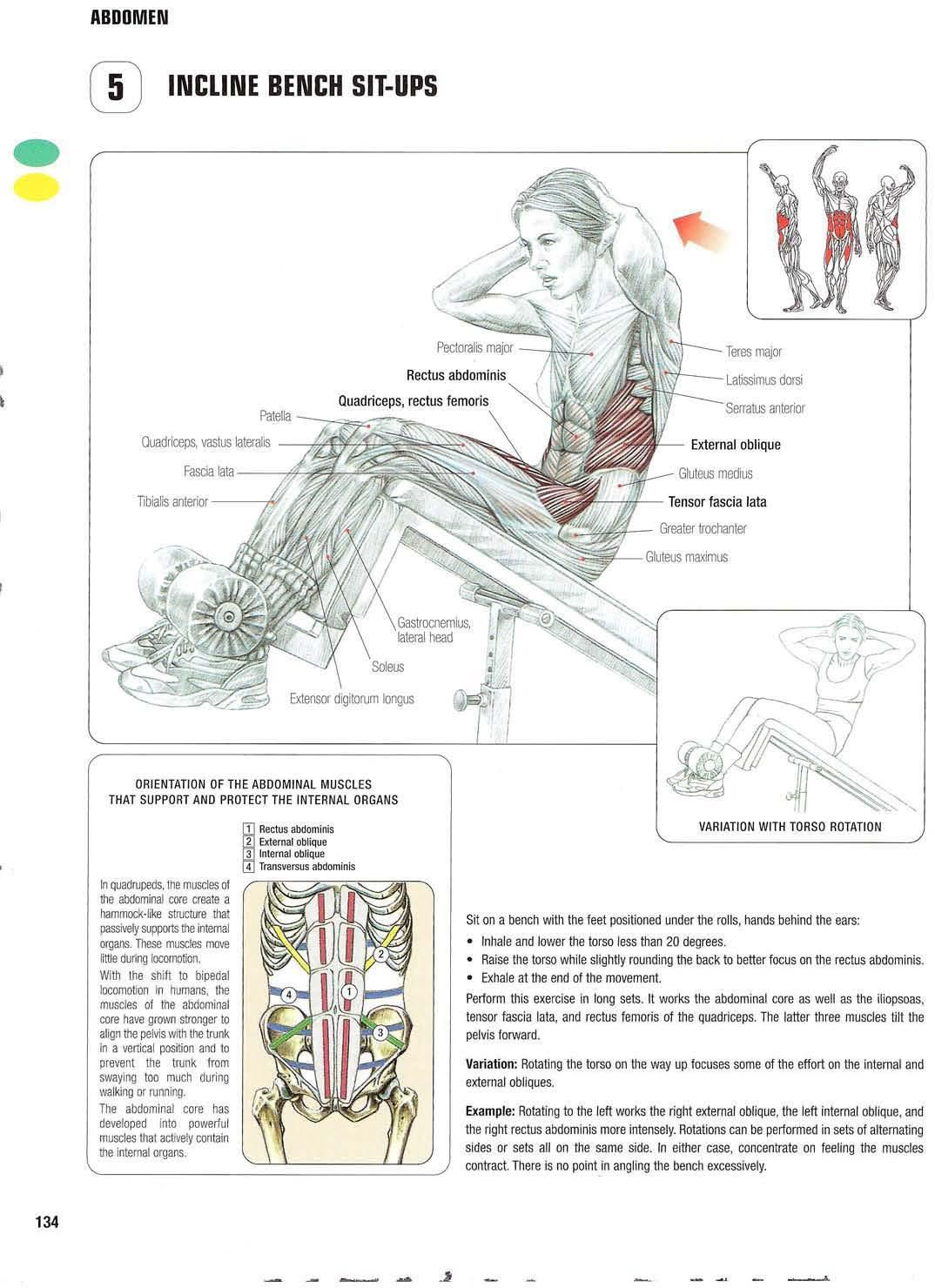 Strength training anatomy 5. Incline bench sit-ups Abs, core, six ...