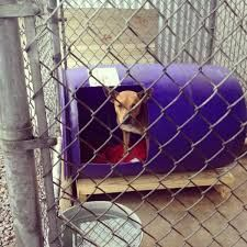 Image Result For How To Make Kennels From Plastic Barrels Barrel