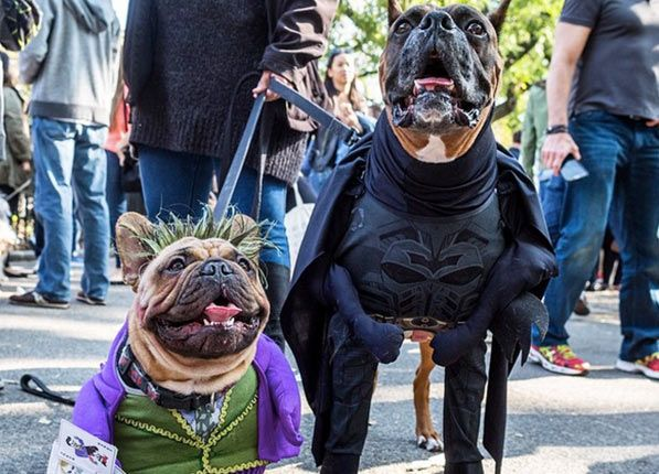 The 38 Best Dog Halloween Costumes Of All Time Dog Costumes Dog
