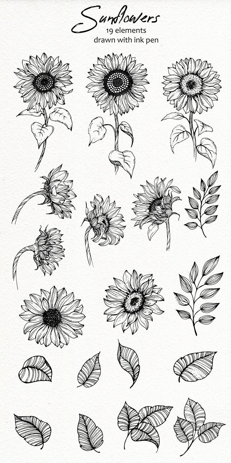 Sunflowers SVG PNG Sunflowers Clipart Printable fl