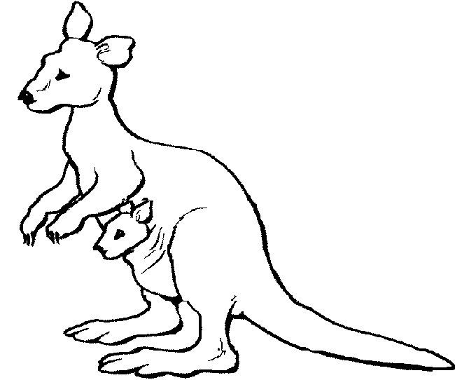 Kangaroo Coloring Page Animal Projects Penguin Coloring Katy