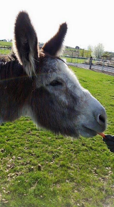 Courtesy: Lavender Dreams Farm & Donkey Rescue, Spokane