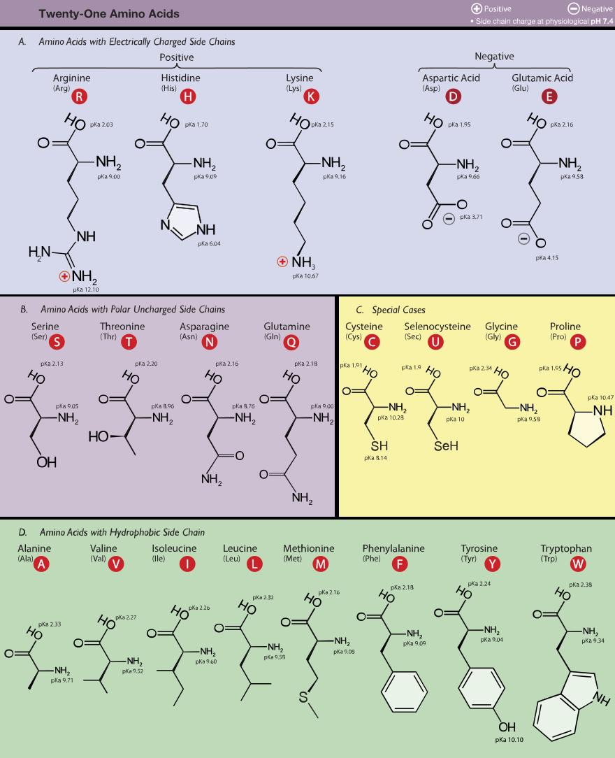 Table Of Amino Acids Estructura Química Estudiar Quimica