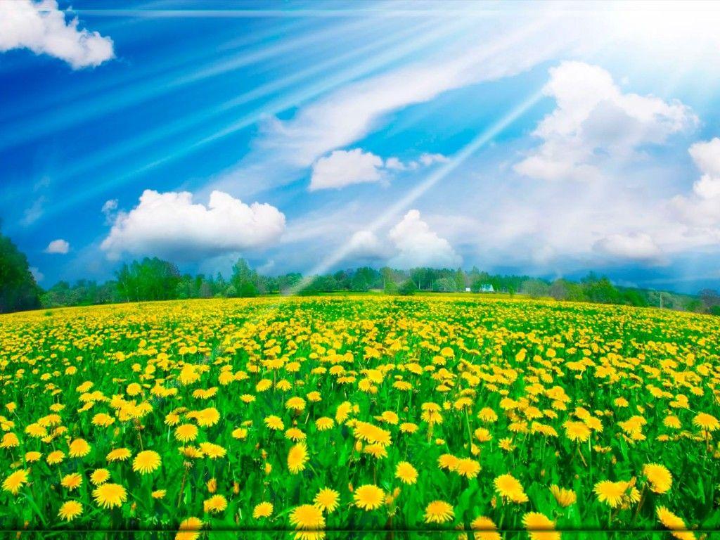 Fondo pantalla bonito paisaje flores fondo de escritorio for Fotos para fondo de pantalla de escritorio