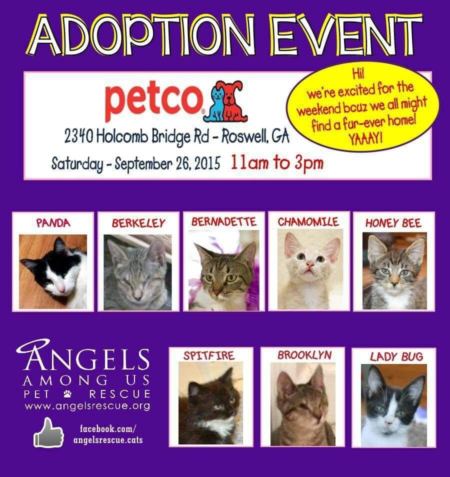 This Weekends Cat Adoption At Petco Petco Cat Adoption Cat Help