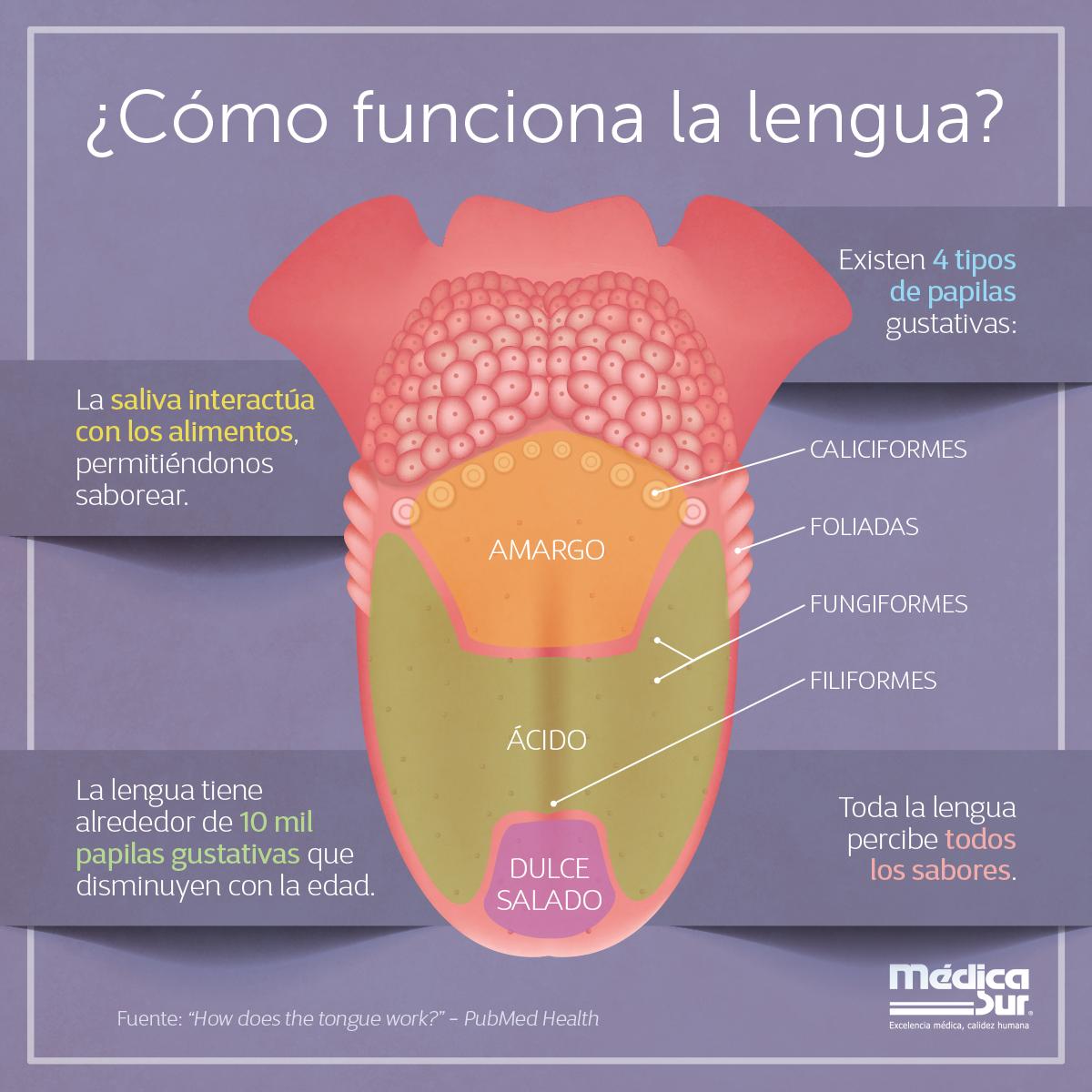 La #lengua tiene alrededor de 10 mil #papilas gustativas que ...