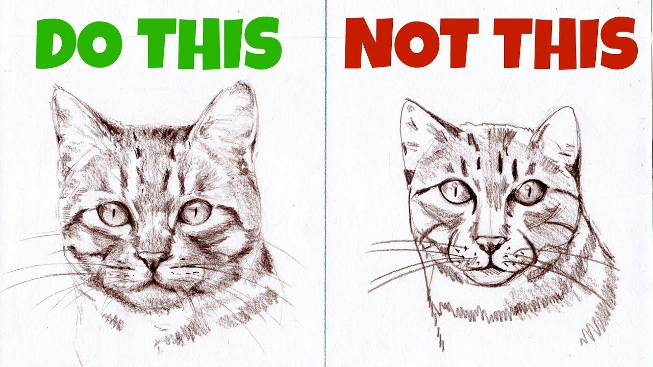 Sketching Animals How To Draw A Realistic Cat With Images