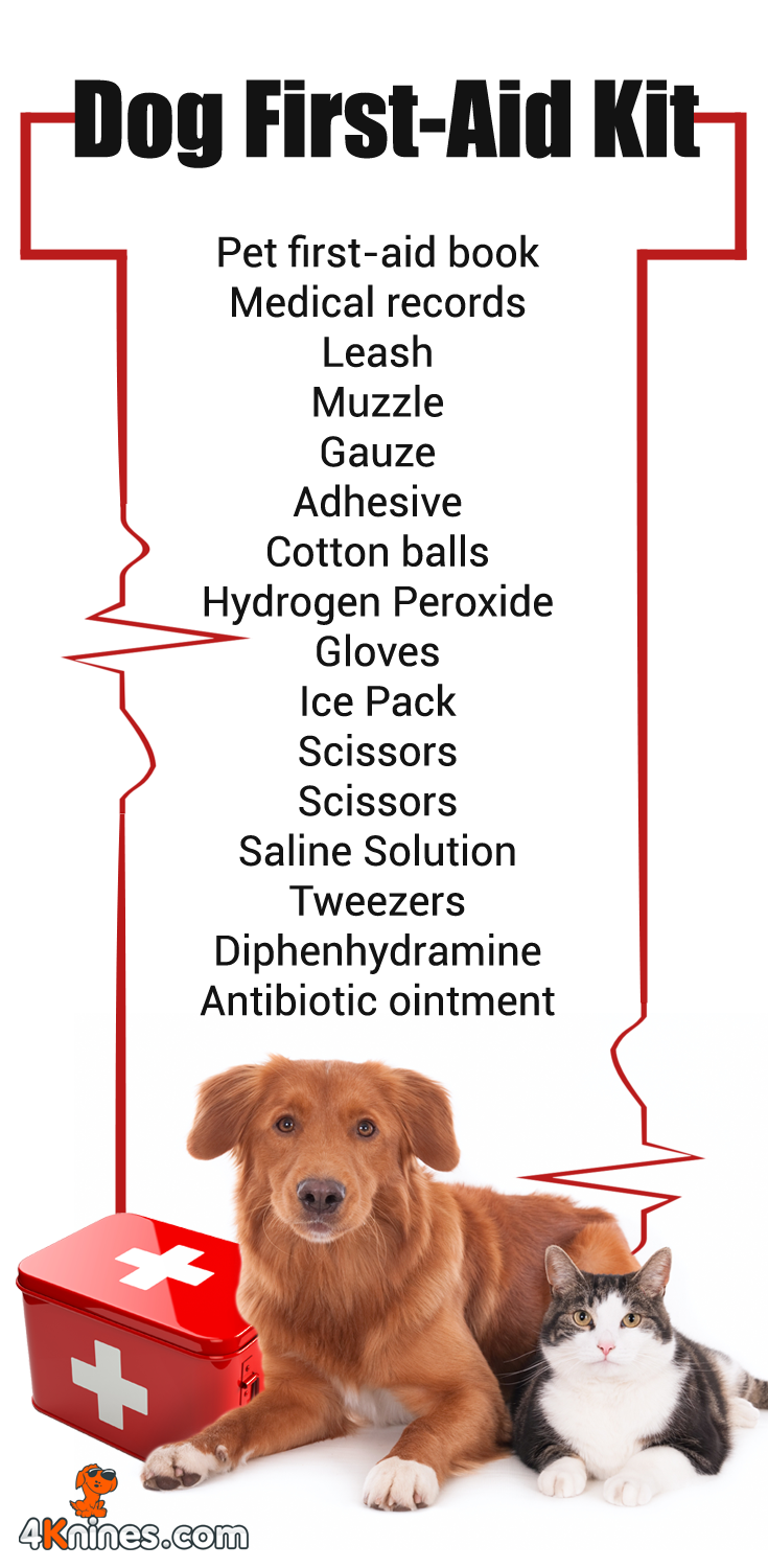 Forget To Have Your Dog First Aid Kit