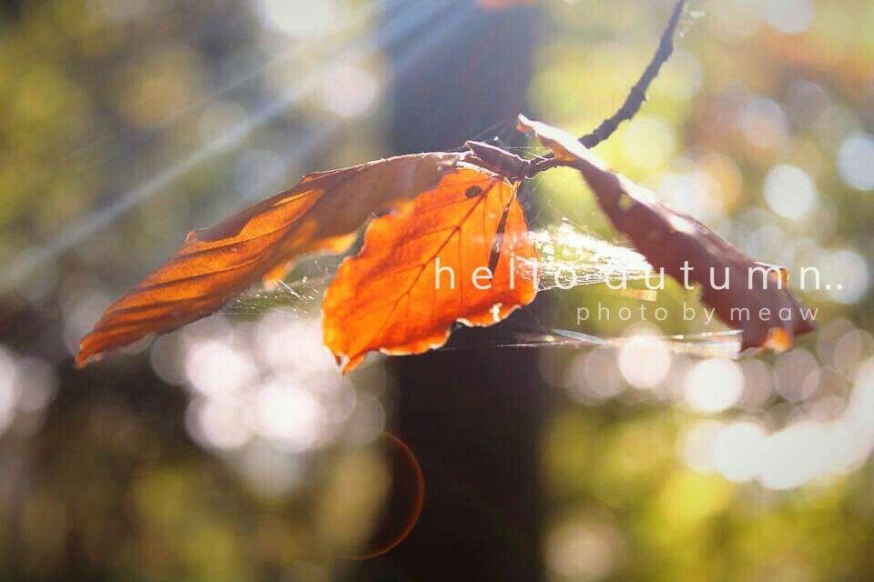Fall October