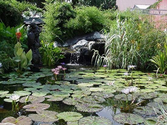 American Aquatic Gardens New Orleans La Garden Pictures