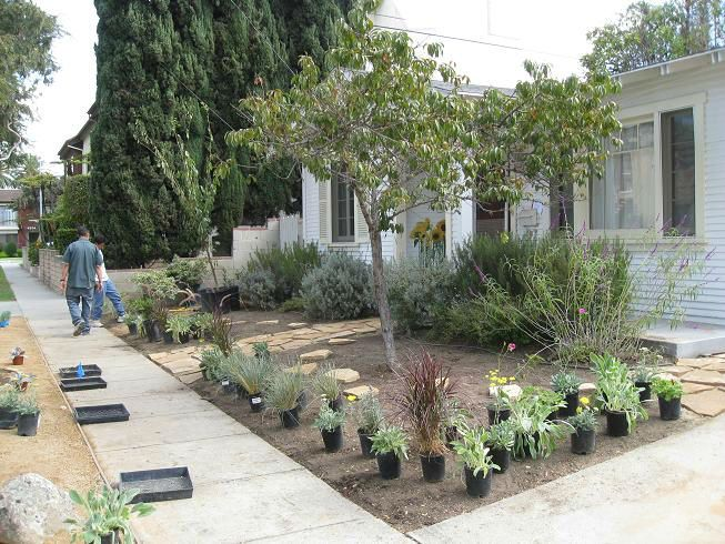 Frontyardduring welcome come in pinterest drought for Drought tolerant yard