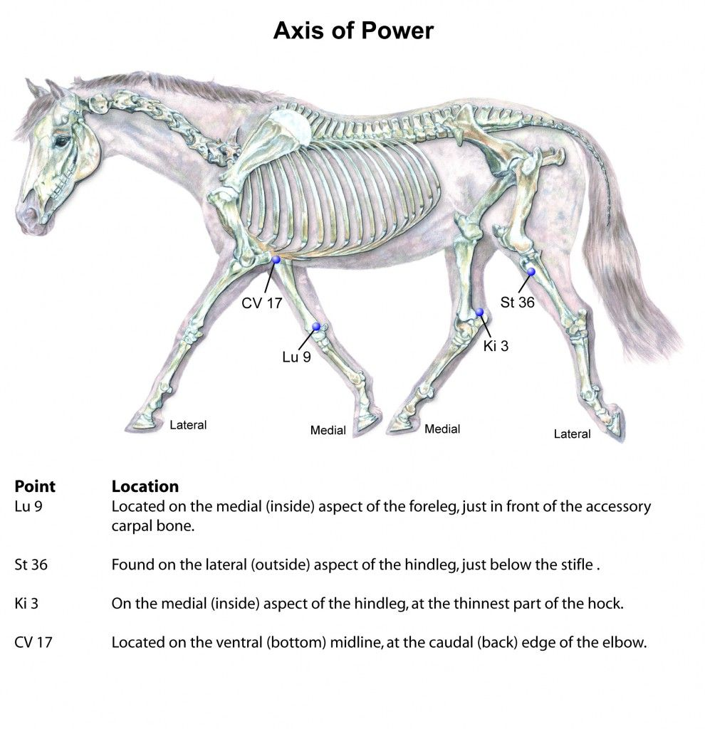 Equine Axis Of Power Acupressure Session Acupressure Points