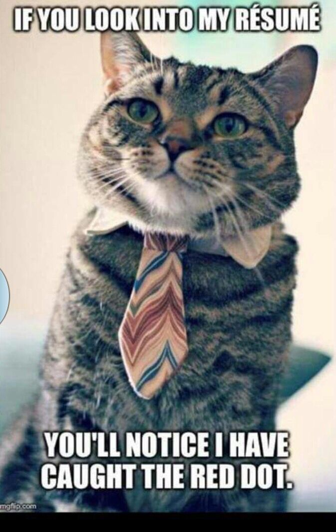 If You Look Into My Resume You Ll Notice I Have Caught The Red Dot Cats Animal Shelter Cat Memes