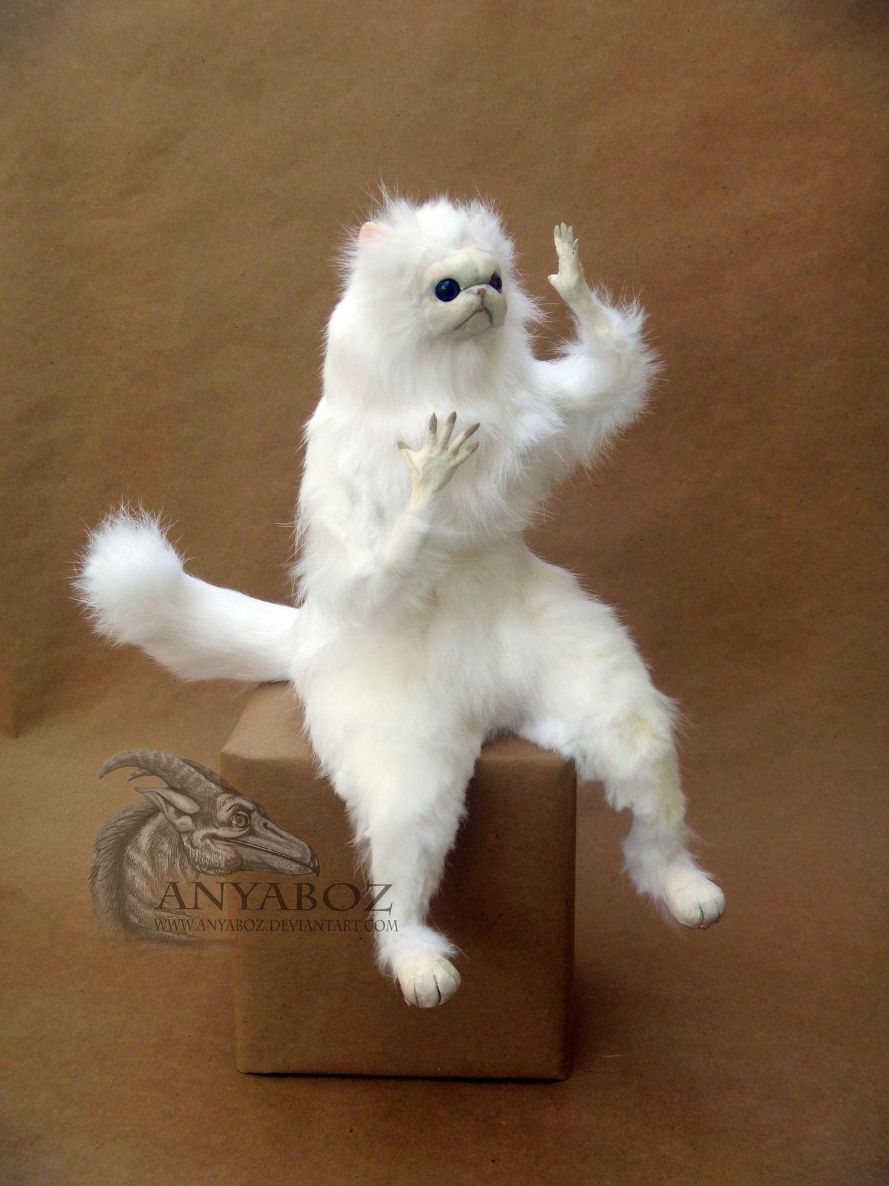 7c098b55440d8bf672ad0a0df49c12ce guardian room persian cat meme persian cat pinterest persian
