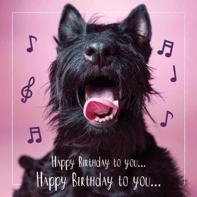 Pin By Barbara Scott On Holy Terriers With Images Dog Birthday