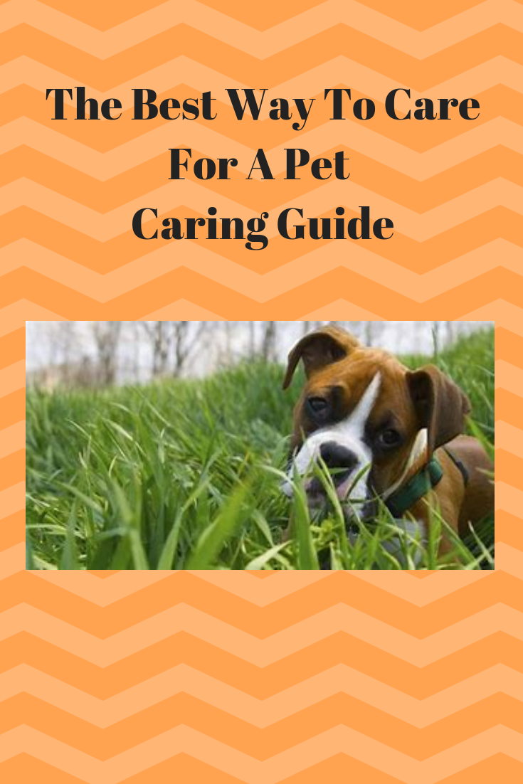the best way to care for a pet caring guide pet care tips rh pinterest com