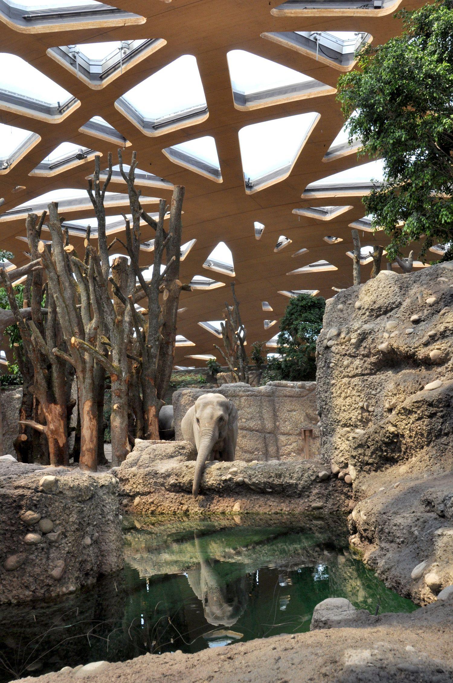 Review: Elephant House Zurich Zoo - Markus Schietsch Architekten ...