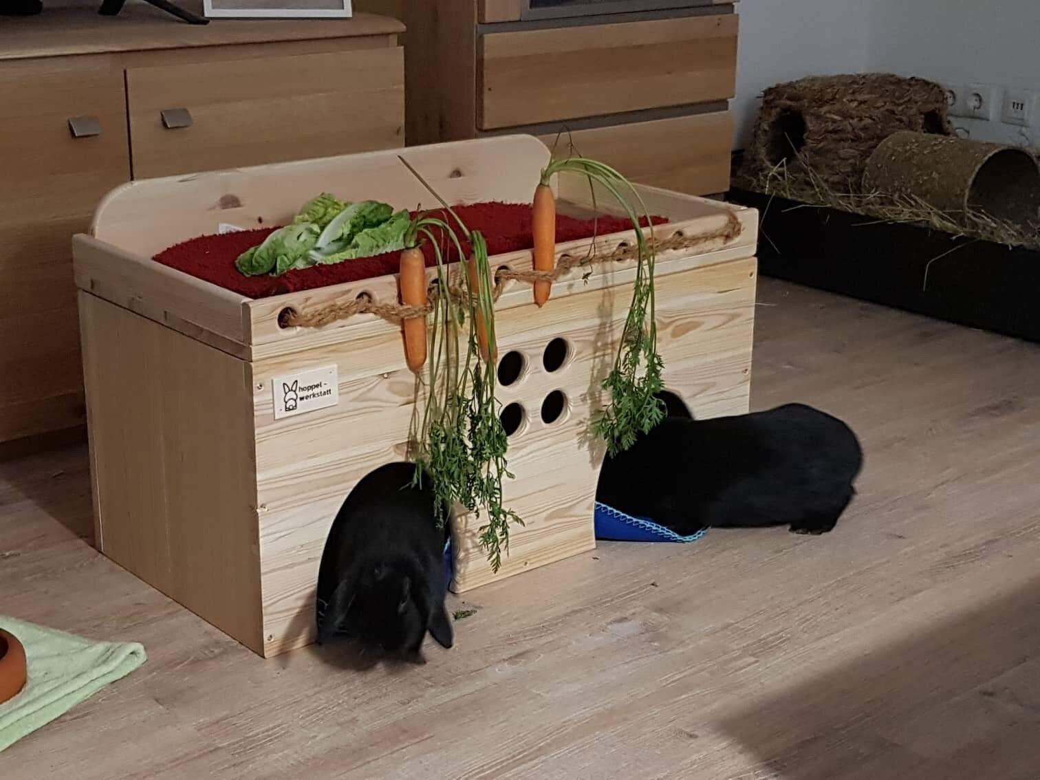 Pin Von Lara Tschirf Auf Hasi Stall Ihnen Kaninchen Meerschweinchen
