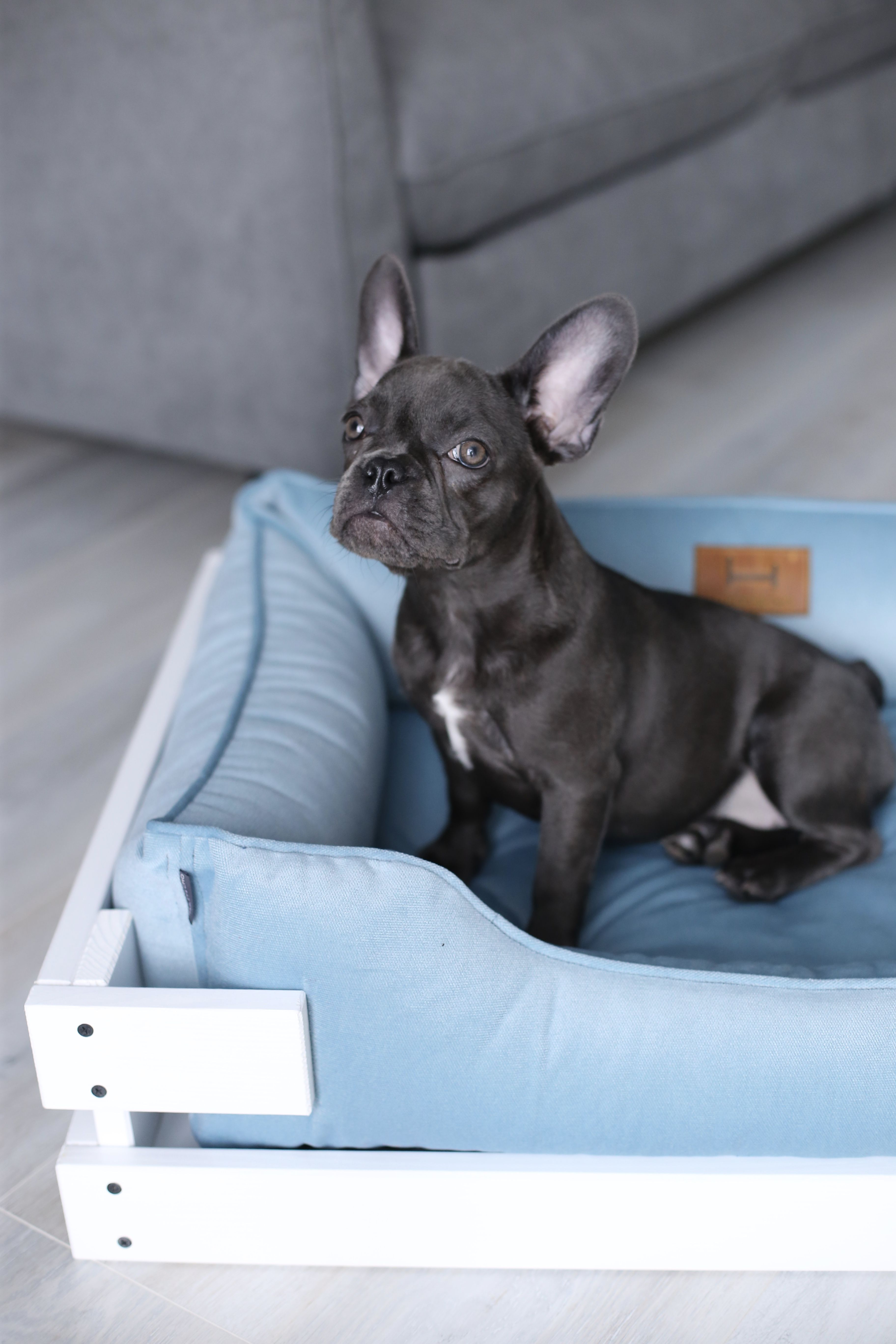 Small Dog Bed Blue Velour With White Wooden Frame Dreamer