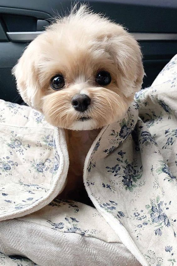Top 10 Cutest Dog Breeds — Small Cutest Dogs We Can't Get Enough Of  #Breeds #Cutest #Dog #Dogs #Small #Top