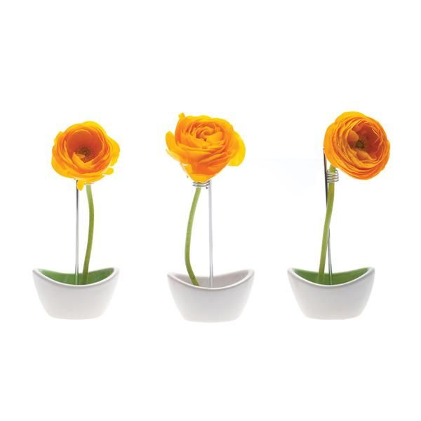 Mayflower Wish List Pinterest Simple Flowers Flower Vases And