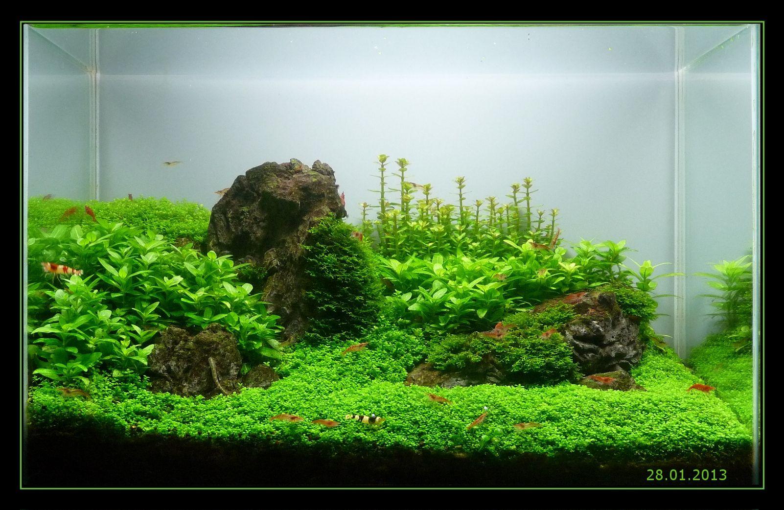 Mini M Iwagumi Dry Start Aquascaping Wasserpflanzen Aquarium Aquascape