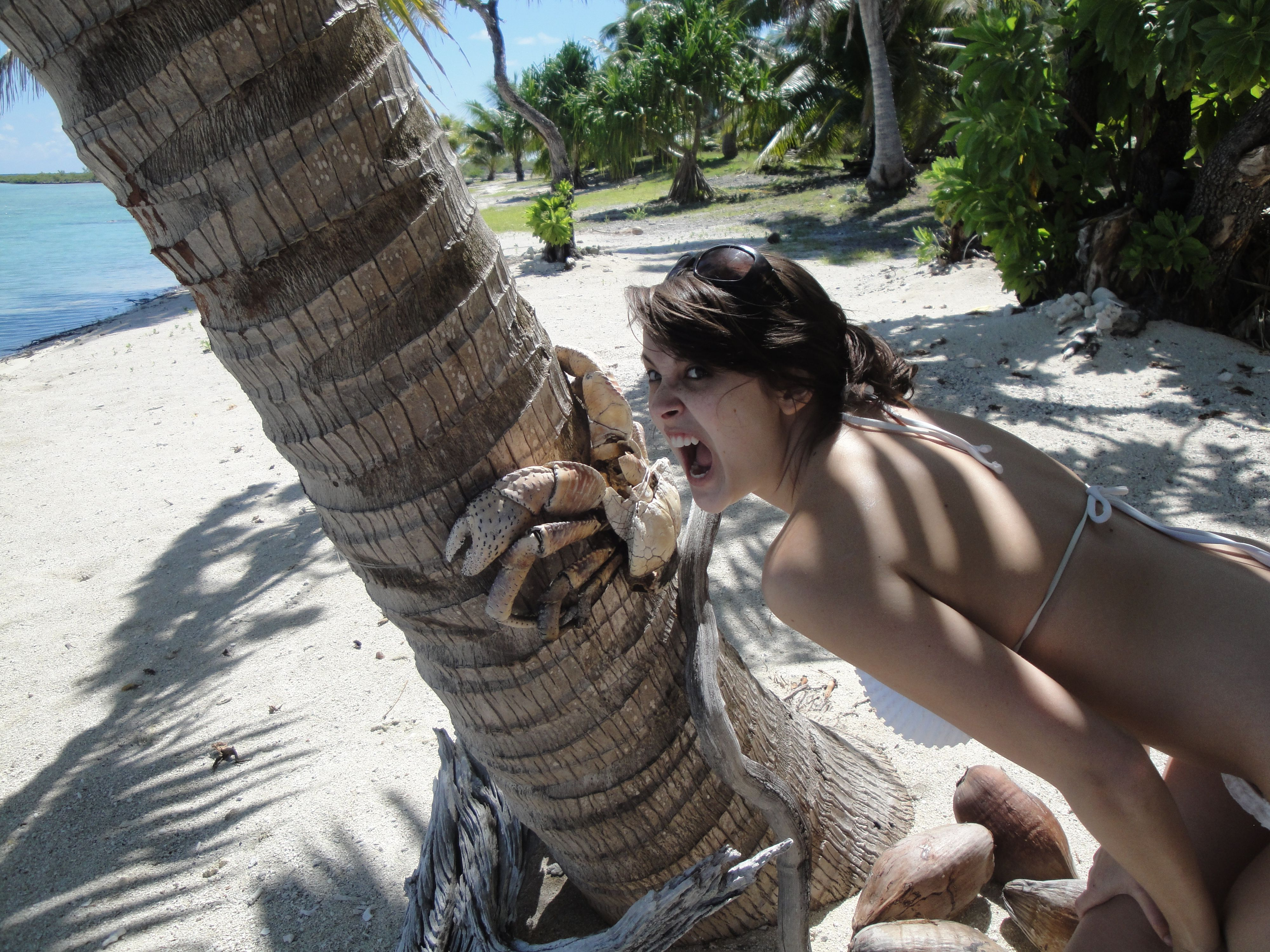 Coconut crab yahoo image search results projects for Do you have to buy land in alaska