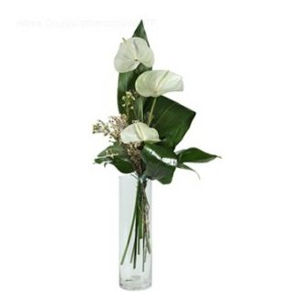 A Beautiful One Dozen Of White Anthuriums Placed In A Glass Vase For Condolence Gift To Funeral Send Anthurium Arrangement Online Flower Shop Anthurium Flower