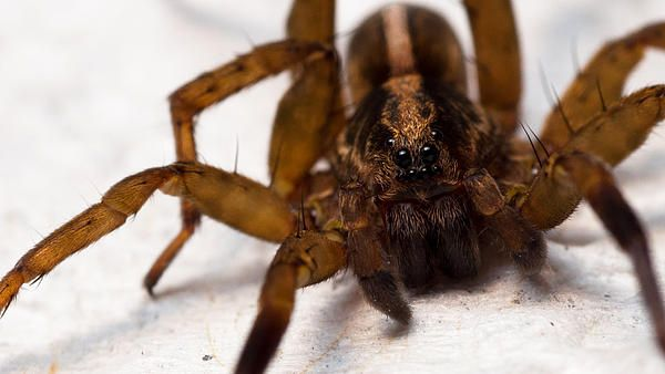House Spider By Marc Dufour House Spider Spider Cute House