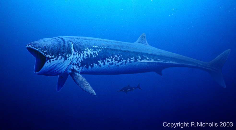 Leedsichthys leedsichthys leedsichthys problematicus