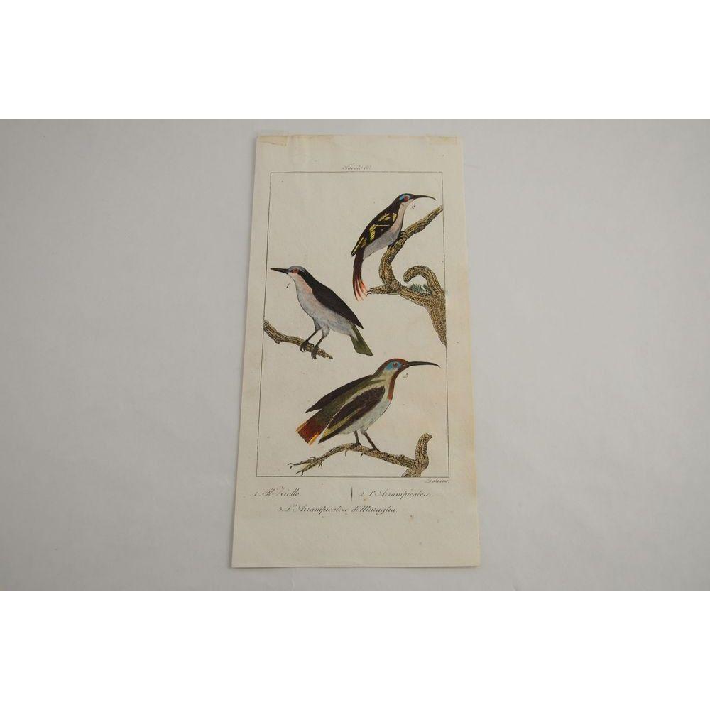 Gravure D'oiseaux Ancienne Colorée à La Main Tav. 68