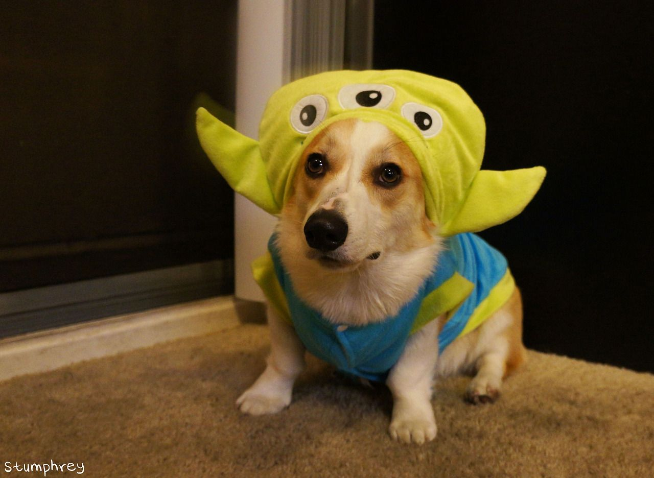 The Clawwww Puppy Halloween Costumes Corgi Pet Costumes