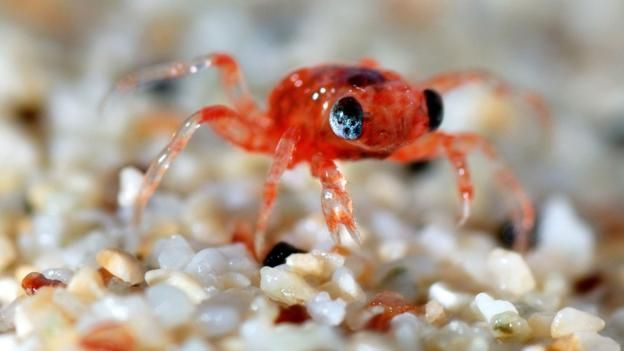 australia s sea of crimson claws christmas island christmas island crabs and animal