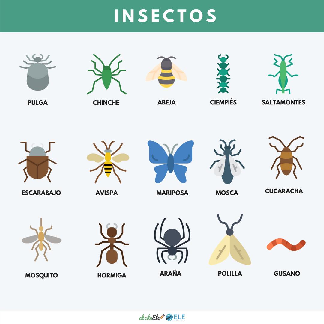 Spanisch Spanisch Lernen Spanisch Macht Spass Spanisch Spanischlernen Spanischmachts In 2020 Learning Spanish Spanish Animals Spanish Vocabulary