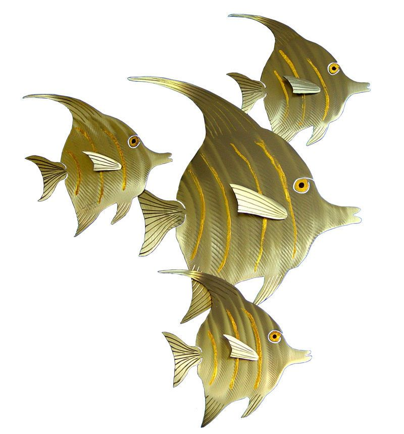 Striped angel fish 23\