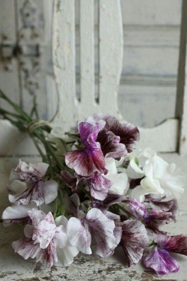 Pin by deborah annღ on Color | Lavender