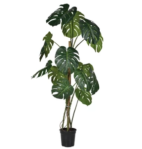 Large Indoor Plants Png Google Search Google Homeplantspng Indoor Large Plants Png Philodendron Plant Large Indoor Plants Plants