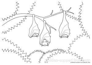 Sleeping Fruit Bats Bat Coloring Pages Fruit Bat Coloring Pages