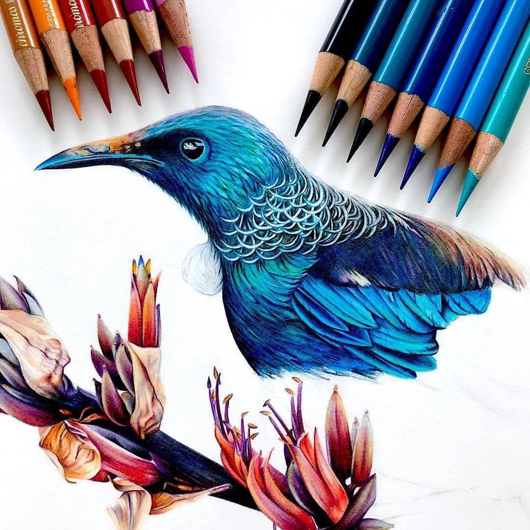 Colored Pencil Artworks On Instagram Awesome Drawing Artist Dominique Cates Art Color Pencil Art Color Pencil Sketch Canvas Drawing