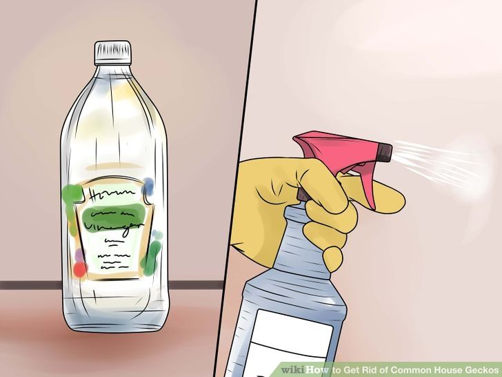 7c101ede9a12129de2c1af1fd4d03f3b - How To Get Rid Of Wall Lizards At Home